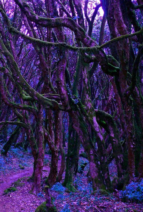Lavender Fairy Forest-Natures Palette ✿✿ڿڰۣ(̆̃̃--Donna-NYrockphotogir@twitter.com/  ✯ Beautiful  ✯✯