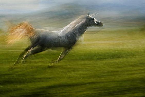 Photo arow by Milan Malovrh on 500px