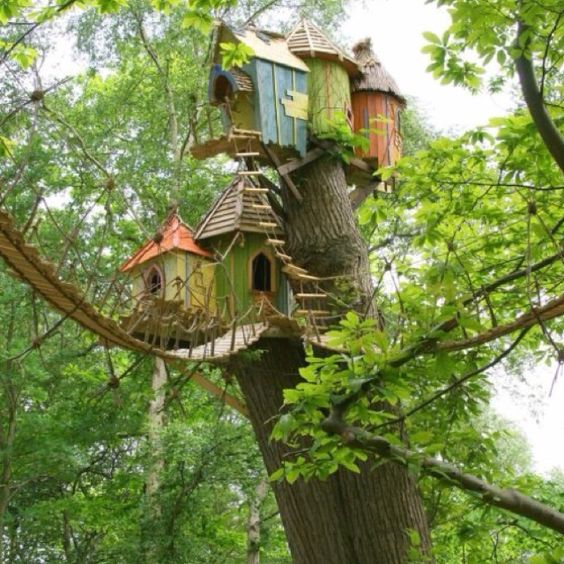 Best Tree Houses Tree Houses And Trees On Pinterest