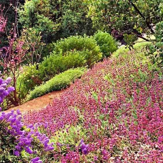 All about groundcover plants photos and roots for Hillside landscaping plants