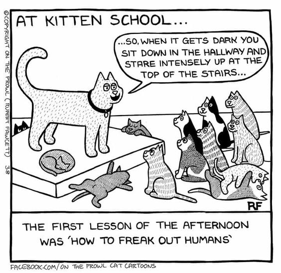 at kitten school...