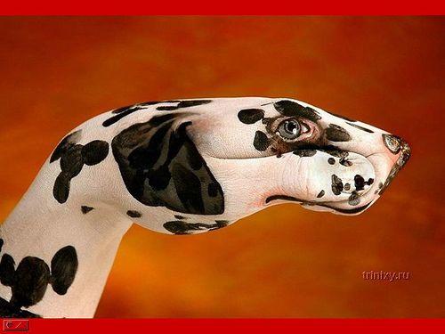 Dalmatian, Maini, Caine    Like and repin please :)
