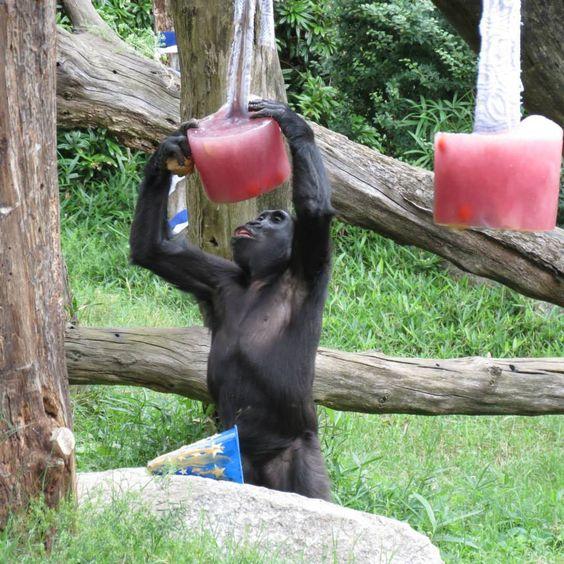dc zoo 4th july