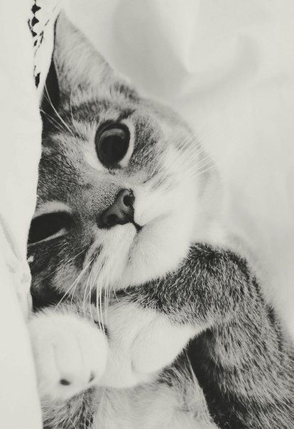 Lets cuddle..