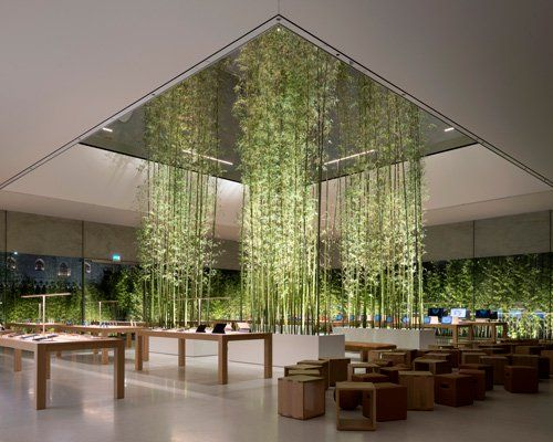 Bamboo Plants Pierce Apple Store Atrium In Macau By Foster