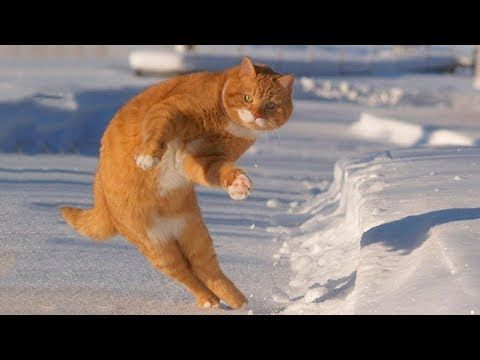 Cute And Funny Pets Funny Cat And Dog Videos Compilation