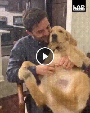 o cachorro esta muito feliz com as cosca…