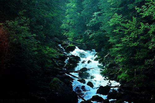 nature forest waterfall (animated GIF image)