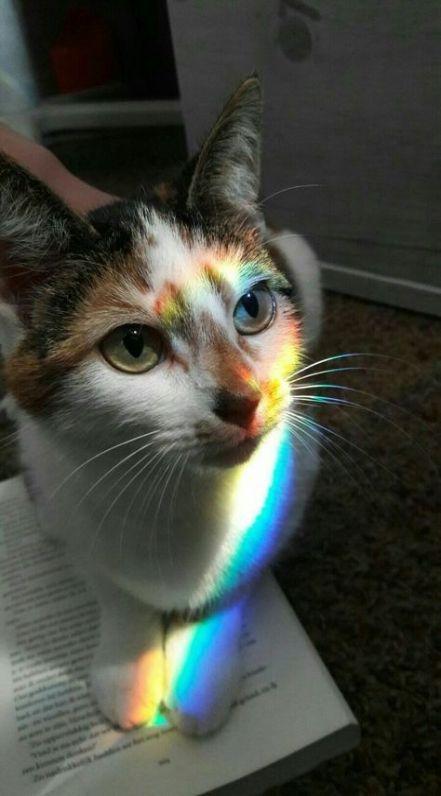 Wallpaper Cat Aesthetic 61 Ideas #wallpaper