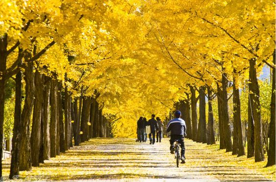 Fall foliage forecast Korea 2018 — Top 16 best places to see autumn fall foliage Korea 2018 - Living + Nomads – Travel tips, Guides, News & Information!