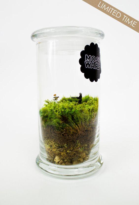 Moss Wars // Princess Leia — Moss Love Terrariums // Star Wars