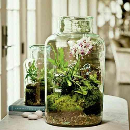 terrarium avec bocal et plantes