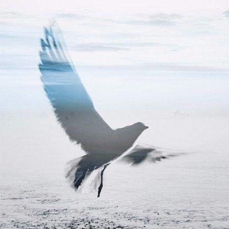 quadro bird sky