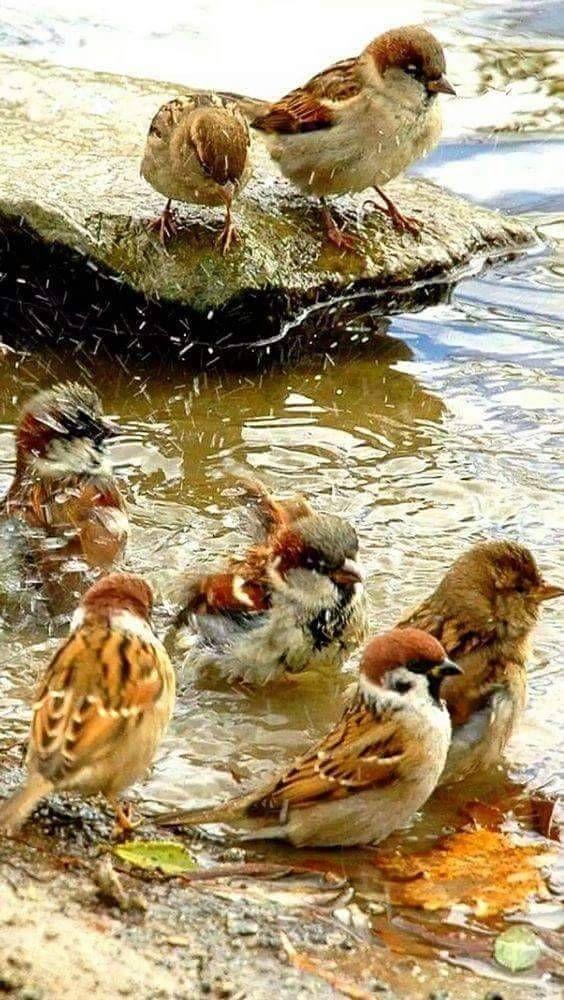 Notitle Tiere Tiere Vogel Als Haustiere Wilde Tiere
