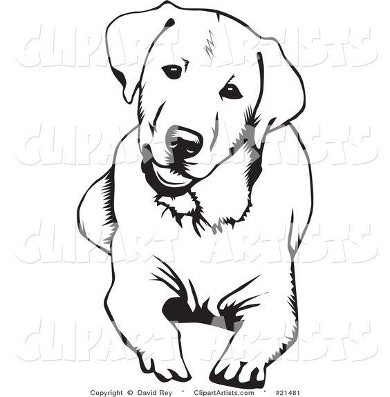 how to draw a cute labrador face