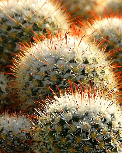 Cactus Close-up