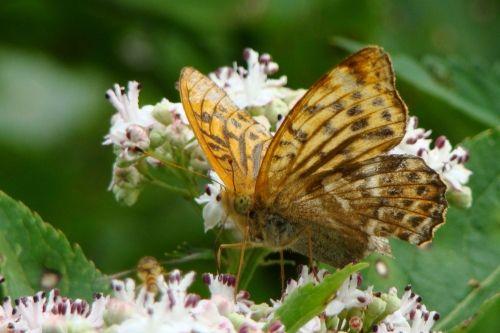 2013-08-26: lepidoptera