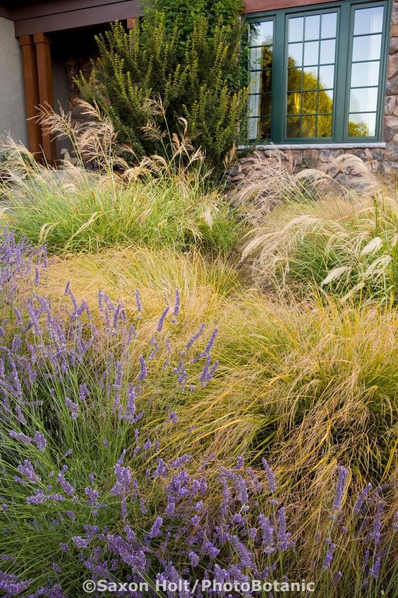 Pinterest the world s catalog of ideas for Front yard ornamental grasses