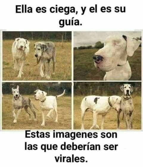 Pin By Z Ul V Ll D Res On Life Dogs Blind Dog Dog Training