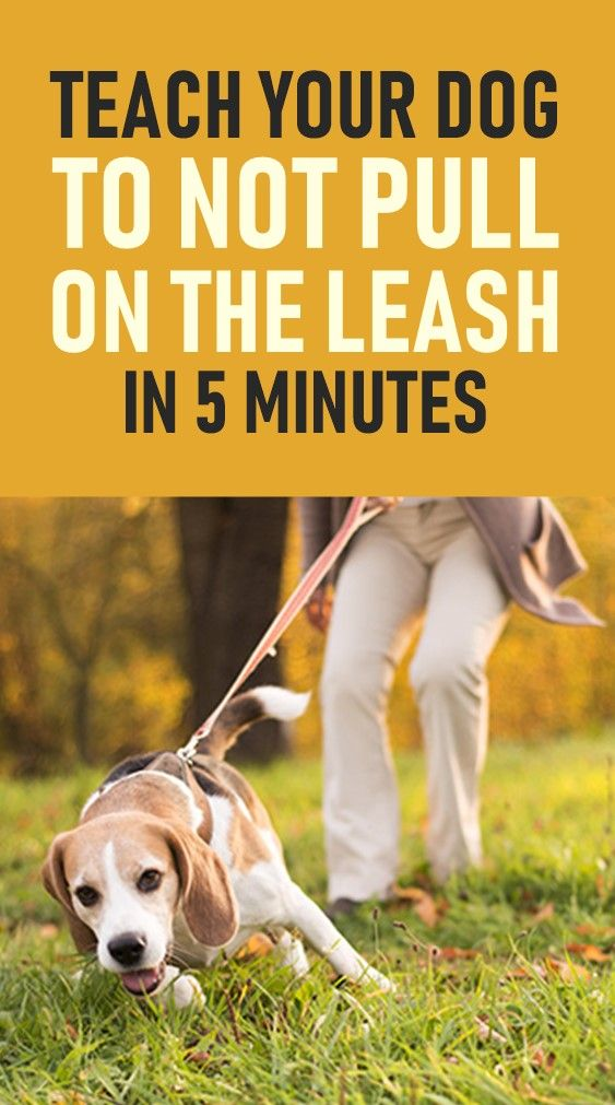 Here S How You Can Stop Your Dog Pulling On The Leash These