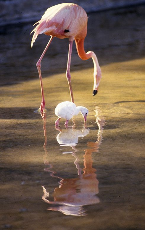 Career In A Year Photos 1988 Baby Flamingo At The Dallas Zoo In