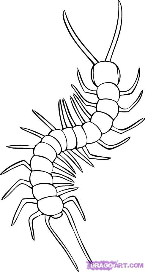 Line Drawing How To : How to draw a centipede step clip art pinterest