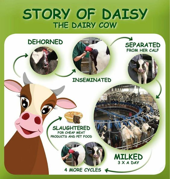 The dairy industry causes as much pain and suffering as the meat industry. Go Vegan!