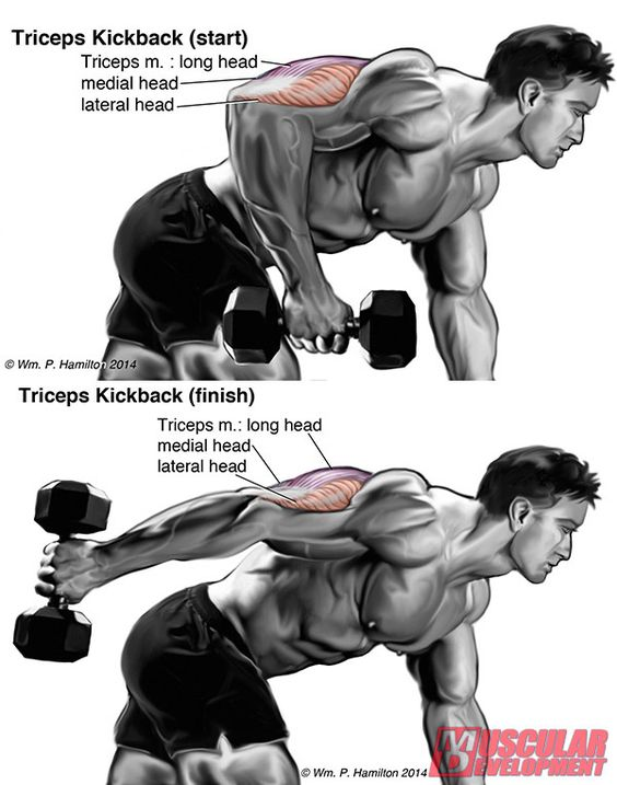 Training, Conditioning and Triceps on Pinterest