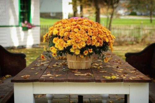 Autumn Leaves Image By Toy Huckaby Burton On Autumn At The Farmhouse Mourning Dove Fall Floral