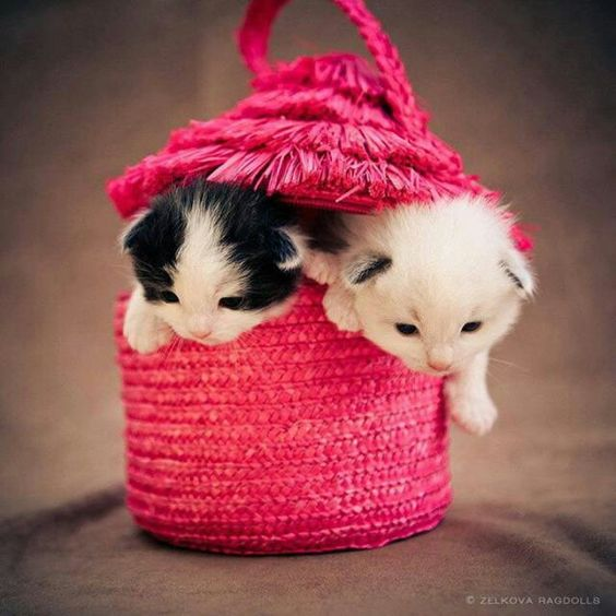 Sonhos rosas...!!!