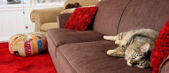 ¿Tu gato te ignora?