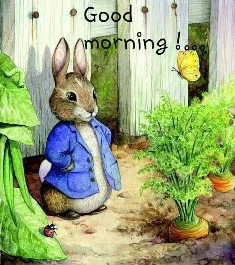 Pin By Peggy Scott On Morning Beatrix Potter Illustrations
