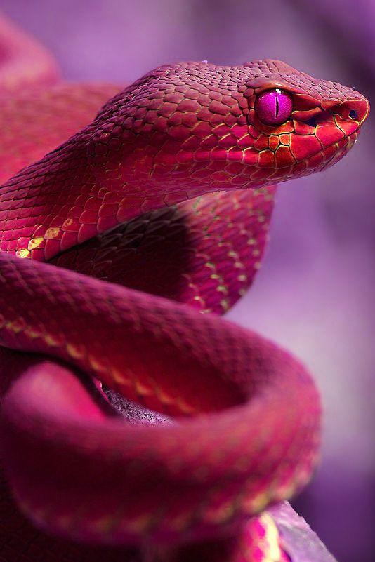 3 – Kígyó