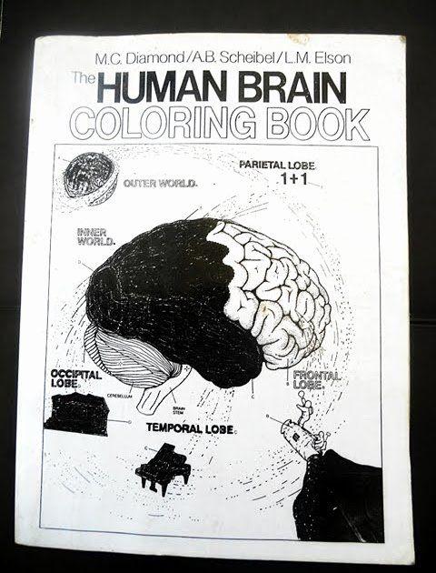 The Human Brain Coloring Book Luxury Gudang Buku Dinda The Human Brain Coloring Book M C Deer Coloring Pages Toddler Coloring Book Anatomy Coloring Book