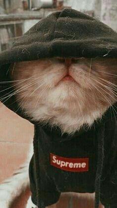 Gatito Gato Estetico Memes De Animales Divertidos Mascotas Bonitas