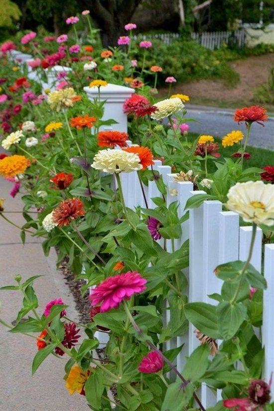 15 Heat-Tolerant Flowers and Plants for Your Summer Garden | Postris