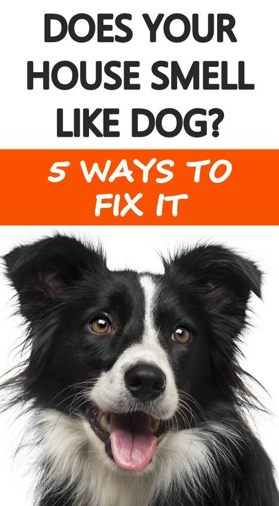House Training A Boxer Puppy Free And What Is Bad Dog Behavior