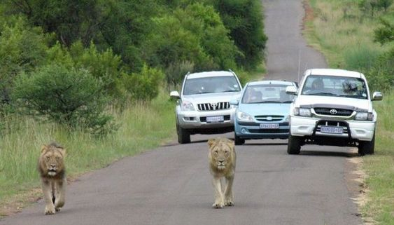 Only in Africa! (35 pics)