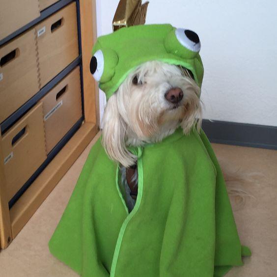 Unserer kleiner Froschkönig