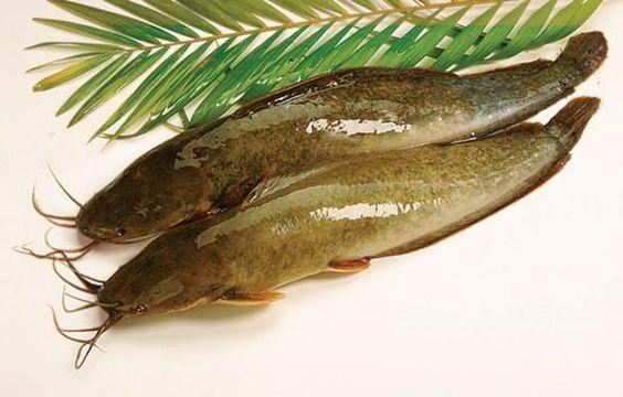 Cá lóc hoặc cá trê là nguyên liệu chính cho món Amok cá