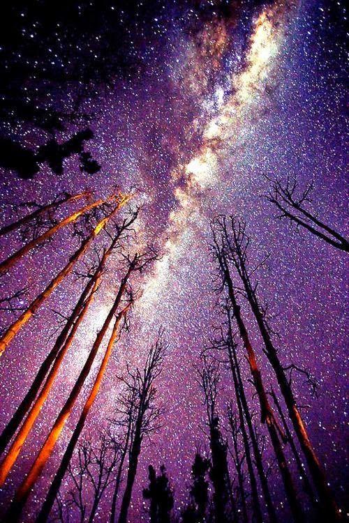 Beautiful Milky way ~ Dreamy Nature