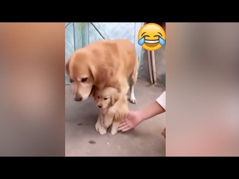 Dont Touch My Puppy Protective Golden Retriever Mama Shielding