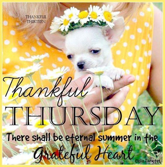 Thankful Thursday thursday thursday quotes happy thursday thursday quote thursday blessings happy thursday quote