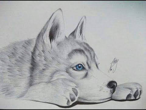Dibujo Perro Lobo Siberiano Youtube Lobos A Lapiz Perros Dibujos A Lapiz Lobo Dibujo A Lapiz
