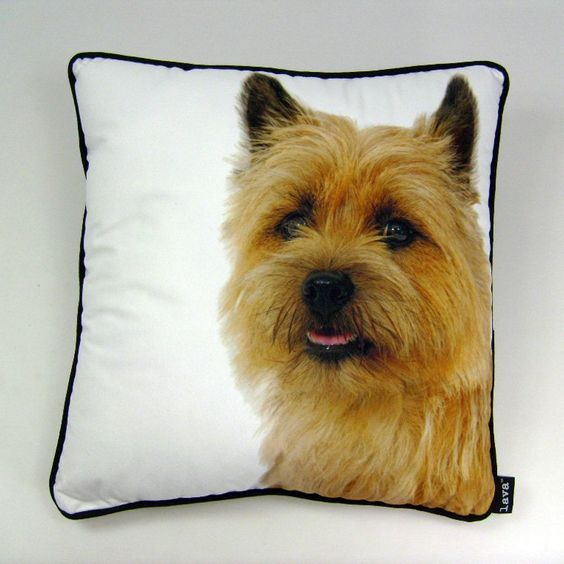 Yorkie 20 x 20 Pillow By Lava