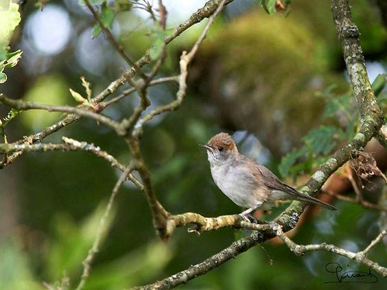 Bird - Vogels - Oiseaux