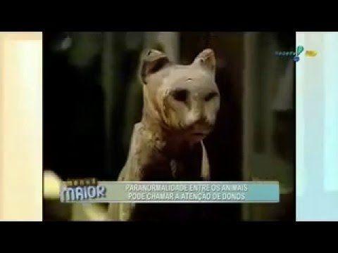Entenda a paranormalidade dos animais!!