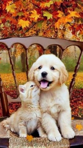 PetsLady's Pick: Adorable Autumn Buddies Of The Day...see more at PetsLady.com -The FUN site for Animal Lovers