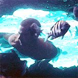 PW. Into the Blue. Gif
