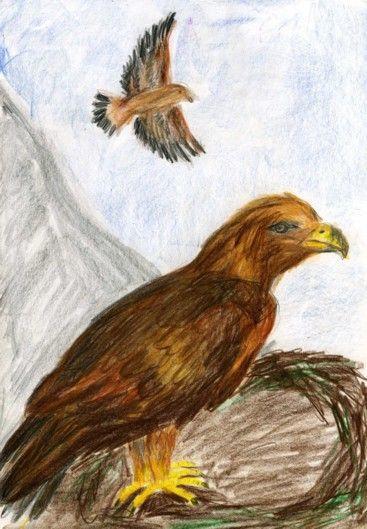 Waldorf ~ 4th grade ~ Human & Animal ~ Eagle ~ main lesson book